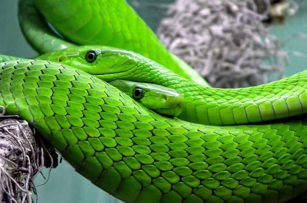 Makrofotografie für Einsteiger Grüne Schlange
